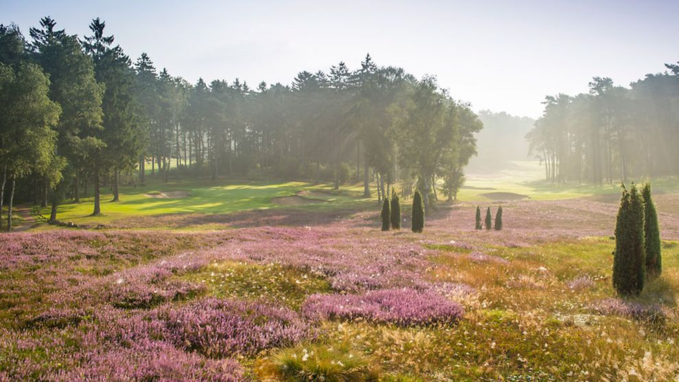 Experience Hamburg's golf courses.