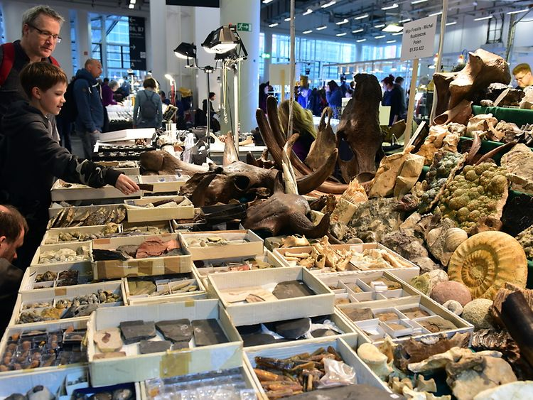 Mineralien Hamburg counts among the world's largest trade fairs in the business. Gemstones, jewellery and fossils will be on display.